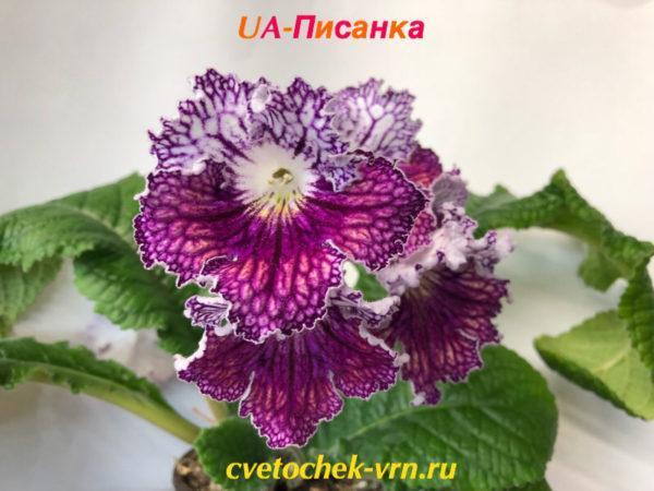 UA-Писанка