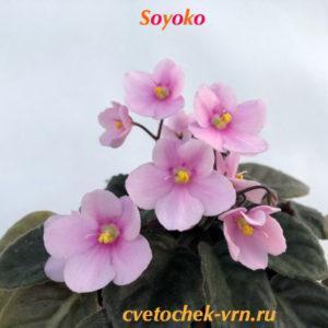 Soyoko (R.Holtkamp)