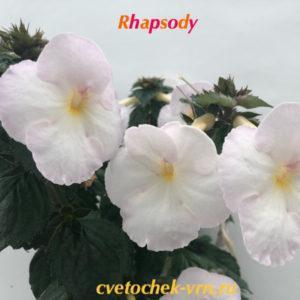 Rhapsody (S.Saliba)