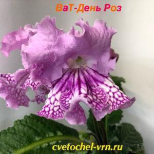 ВаТ-День Роз (Т.Валькова)