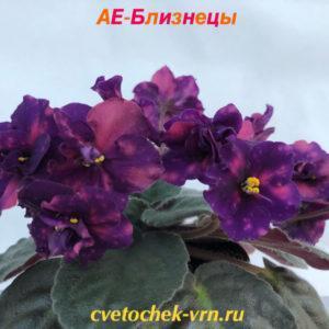 АЕ-Близнецы (Е.Архипов)