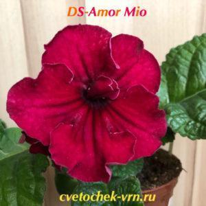 DS-Amor Mio, 984