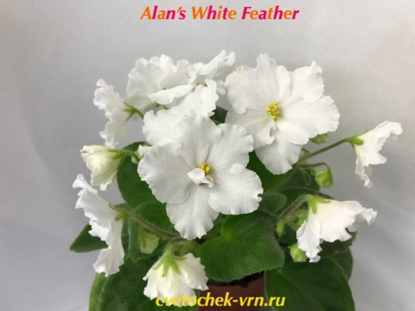 Alan's White Feather (A.Murphy)