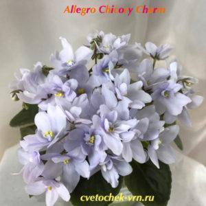Allegro Chicory Charm (J.Stromborg)