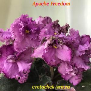 Apache Freedom (J.Munk)