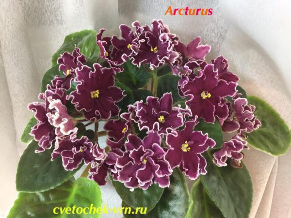 Arcturus (J.Eyerdom)