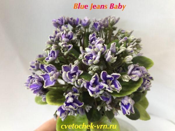 Blue Jeans Baby (Sorano)