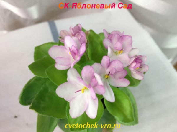 CK-Яблоневый сад (А.Кузнецов) мини
