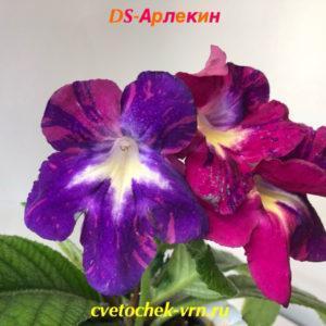 DS-Арлекин
