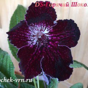 DS-Горячий Шоколад, 476
