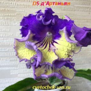 DS-д'Артаньян