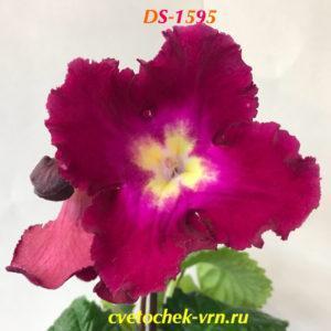 DS-1595
