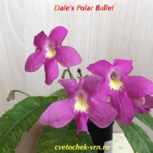 Dale's Polar Ballet (D.Martens)