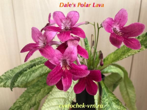 Dale's Polar Lava (D.Martens)