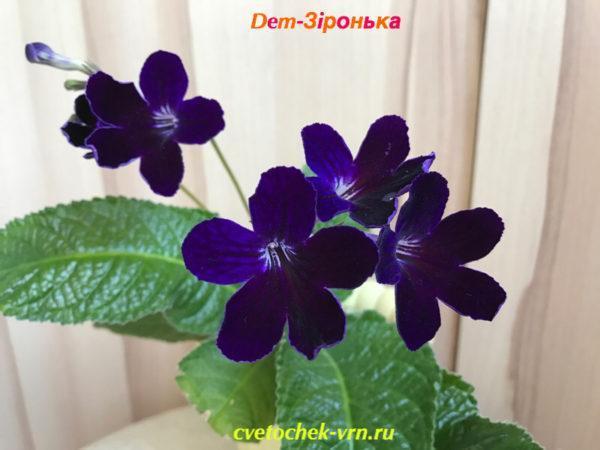 Dem-Зiронька
