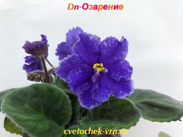 Dn-Озарение (Д.Денисенко)