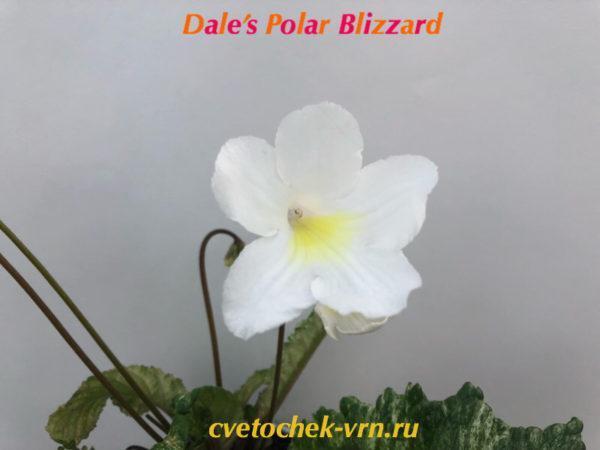 Dale's Polar Blizzard(D.Martens)