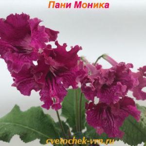 Пани Моника (Парамоновы)