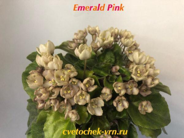 Emerald Pink (LLG Sorano)