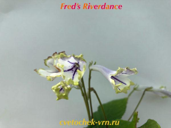 Fred's Riverdance (Fred Bellairs)