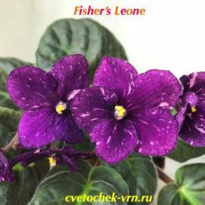Fisher's Leone (E.Fisher)
