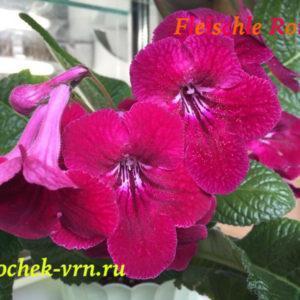 Fleischle Ronia (Fleischle)