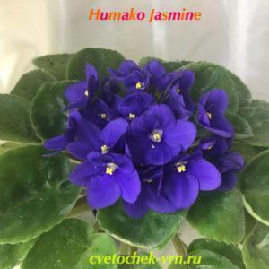 Humako Jasmine