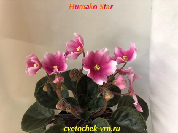 Humako Star (Humako)