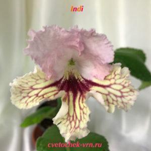 Indi (6075)