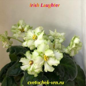 Irish Laughter (Sorano)
