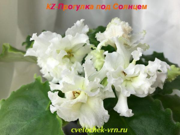 KZ-Прогулка под Солнцем (И.Заикина)
