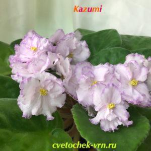 Kazumi (Eyerdom)