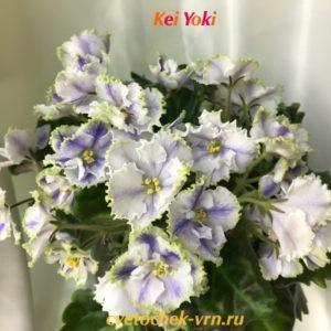 Kei Yoki (Horikoshi Shinohara)