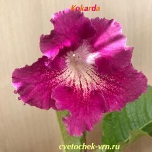 Kokarda (7188)