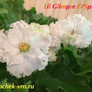 Lil Glimpse O'Spring (LLG Sorano)