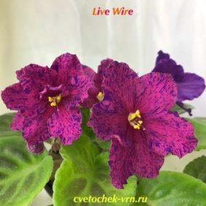 Live Wire (D.Ferguson)