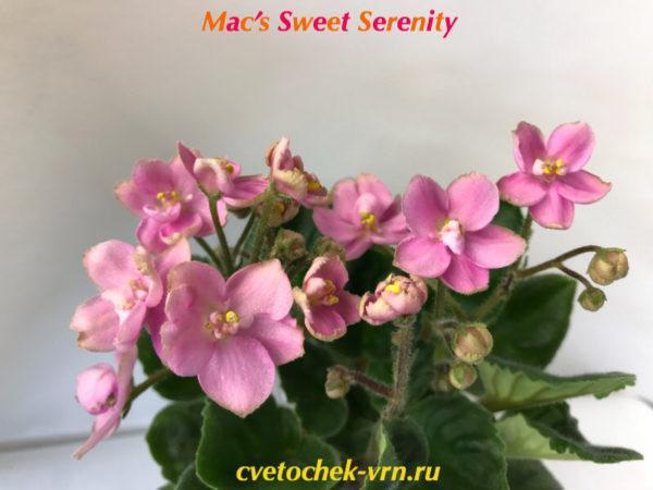 Mac's Sweet Serenity (McDonald)