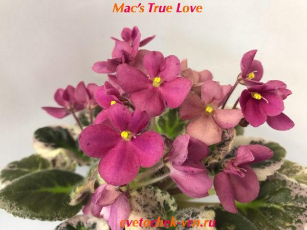 Mac's True Love (G. McDonald)