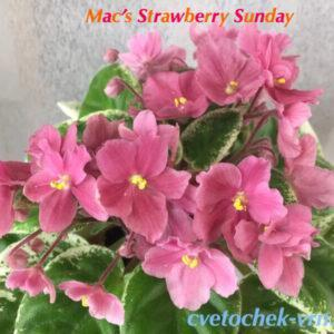 Mac`s Strawberry Sundae (G. McDonald) полумини