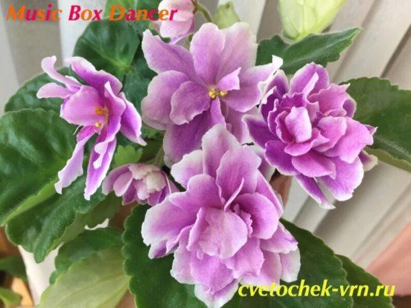 Music Box Dancer (LLG Sorano)