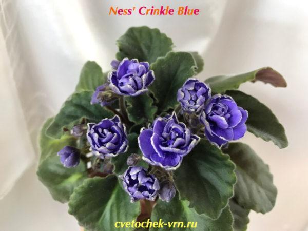 Ness' Crinkle Blue (D.Ness)