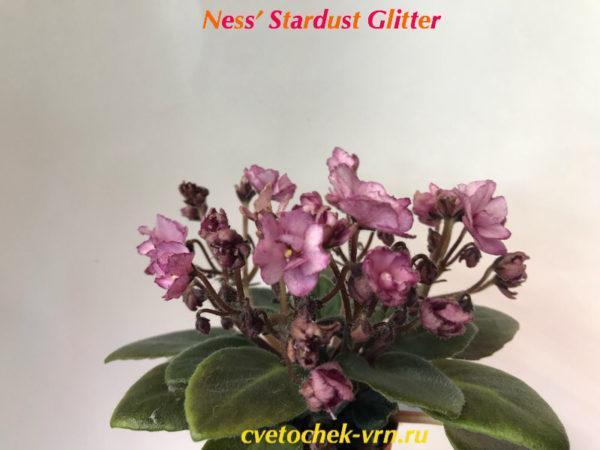 Ness' Stardust Glitter спорт (D.Ness) полумини