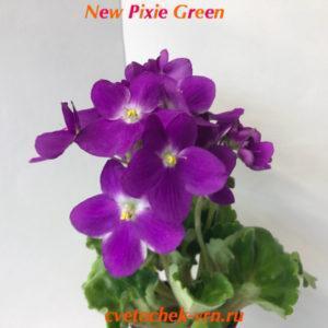 New Pixie Green (G.McDonald)