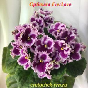 Optimara EverLove (R.Holtkamp)