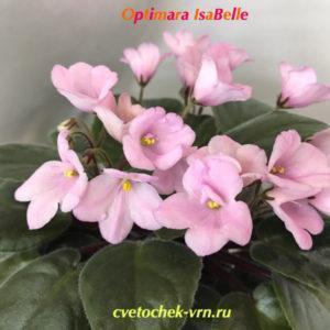 Optimara IsaBelle (R.Holtkamp)