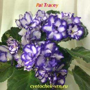Pat Tracey (P. Tracey)