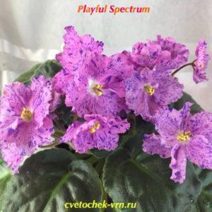 Playful Spectrum (Sorano)