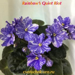 Rainbow`s Quiet Riot (R.Wasmund)