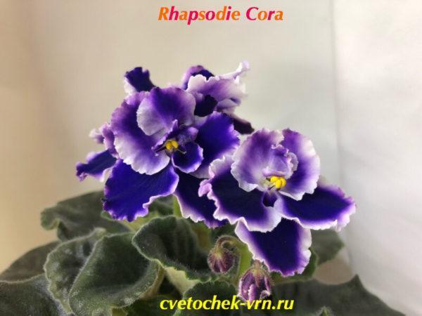 Rhapsodie Cora (Holtkamp)
