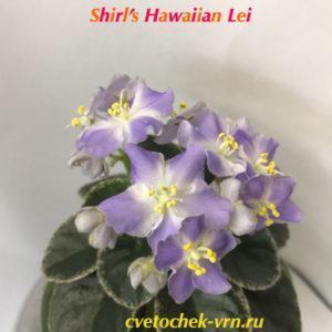 Shirl's Hawaiian Lei (Sanders)